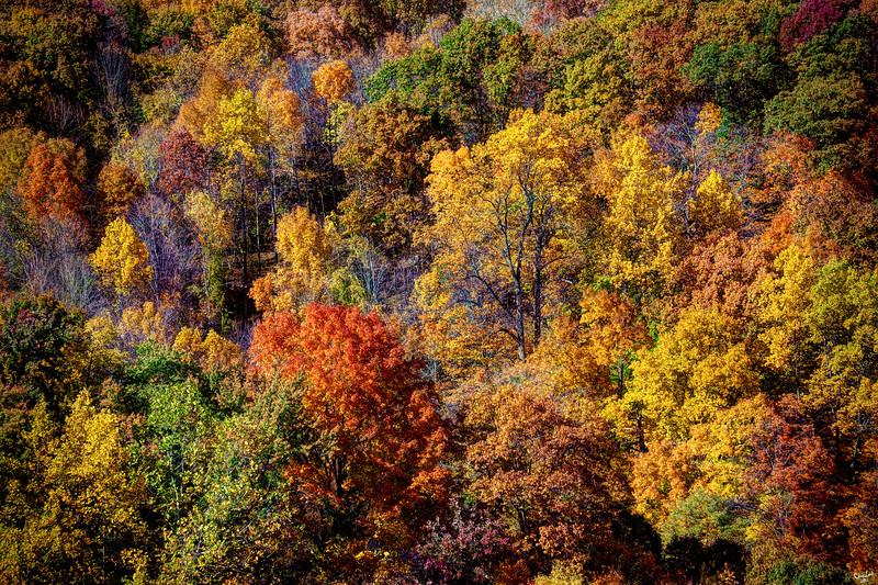Bird's Eye View of Autumn, Poughkeepsie, New York State,