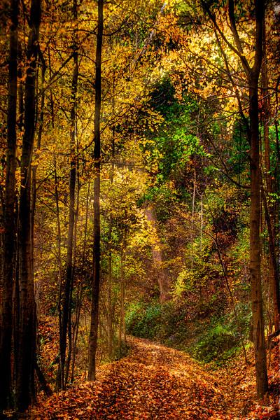 October Woodland Trail