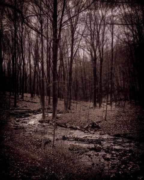 The Dark Twisty Stream, Cold Springs, New York