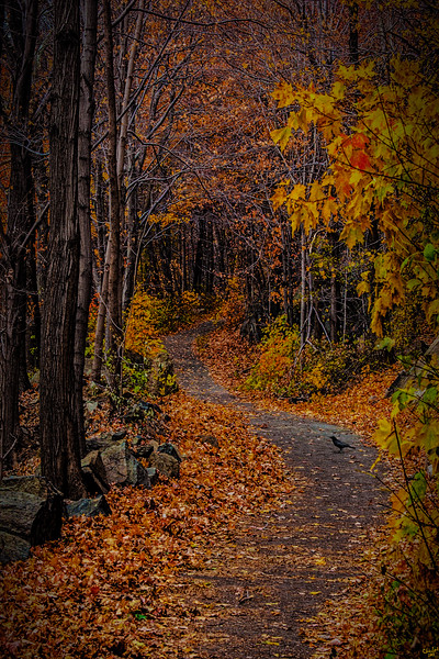 On The Cornish Trail, Cold Spring, New York