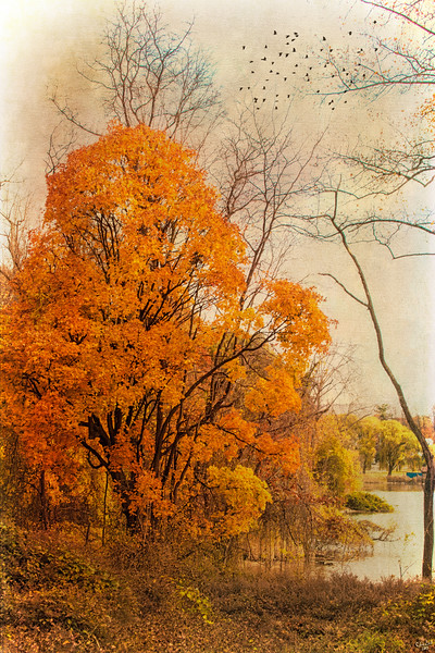 Autumn Trees, Cold Spring, New York