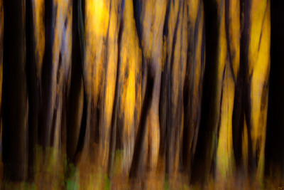 Autumn Forest Abstract