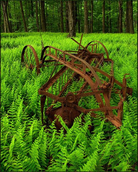Farm Equipment Rusting Amongst Ferns