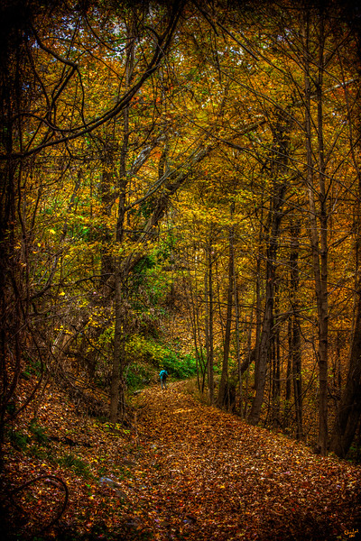 Autumn Trails, Poughkeepsie, New York State,