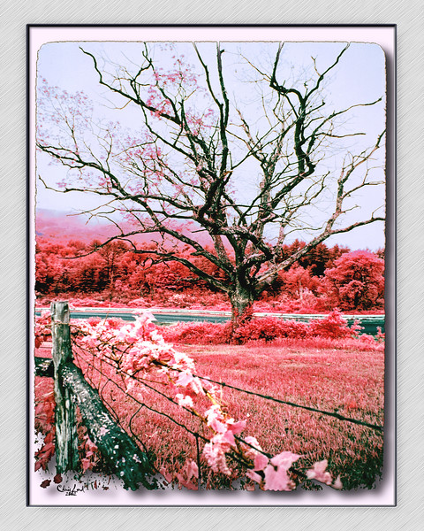 An Infra Red Image of A Tree At Lime Rock