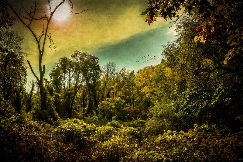 In The Wild Wild Woods