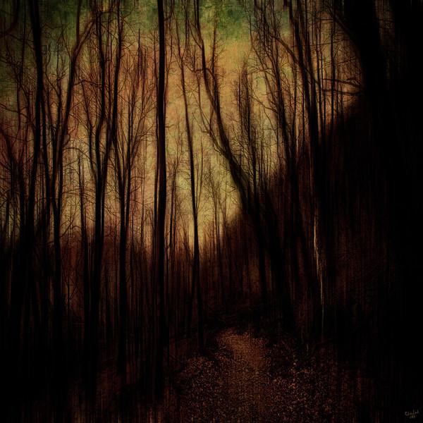 Golden Path, Dark Forest Series