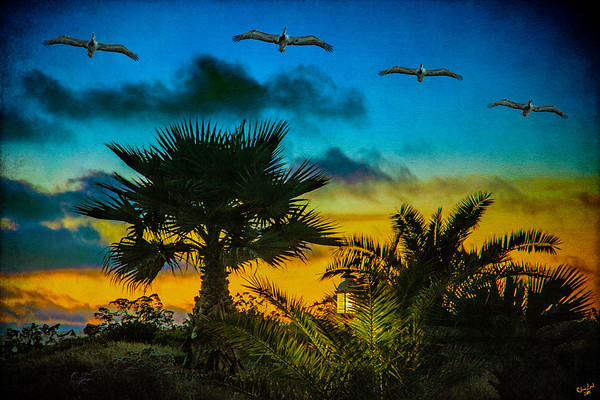 Tropical Sunset with Pelicans