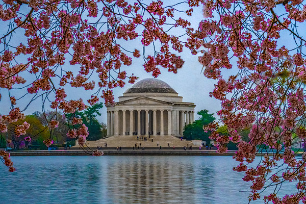 Jefferson Memorial & Cherry Blossoms