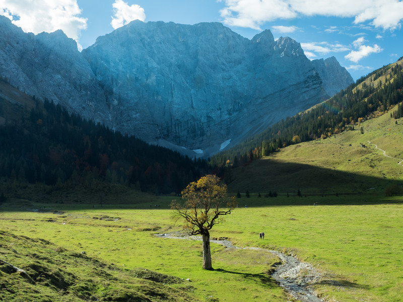Lone Maple and the Valley, Eng Alm, Austria