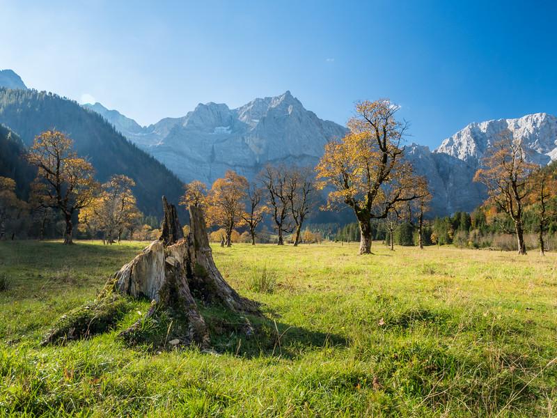 Maple Stump, Eng Alm, Austria