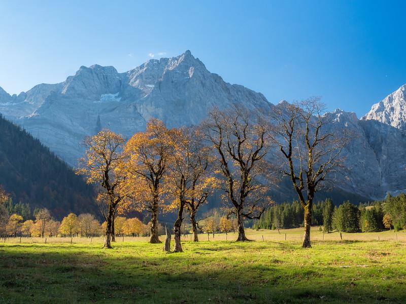 Ancient Maples, Eng Alm, Austria