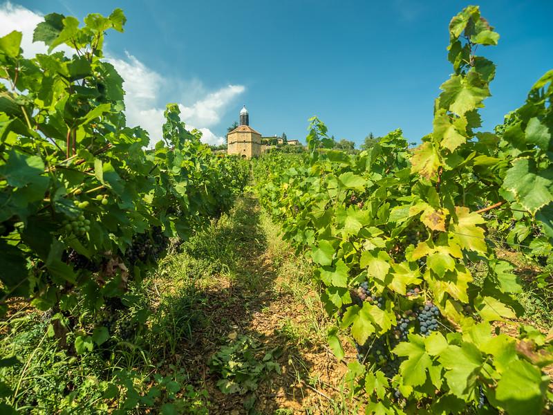 Bagnols Vineyard, France