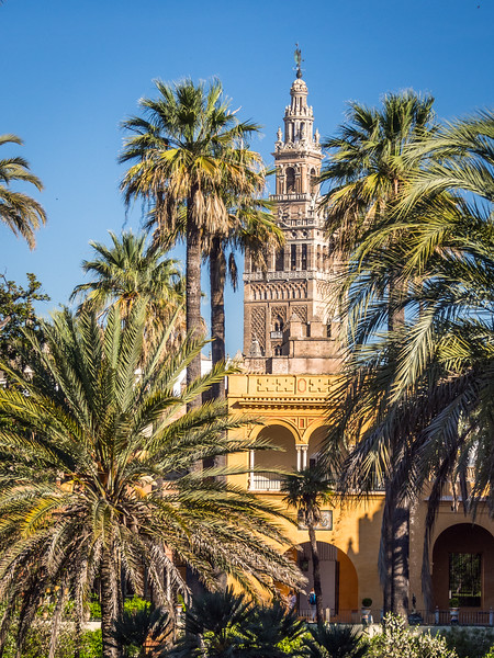 La Giralda from the Alcazar, Seville