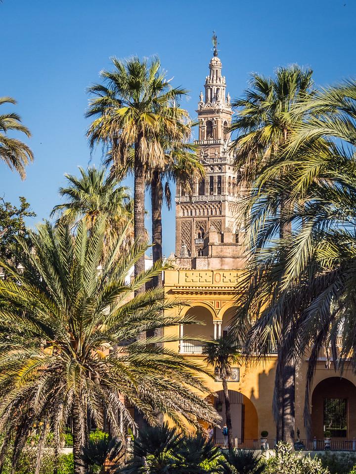 La Giralda from the Alcazar, Seville