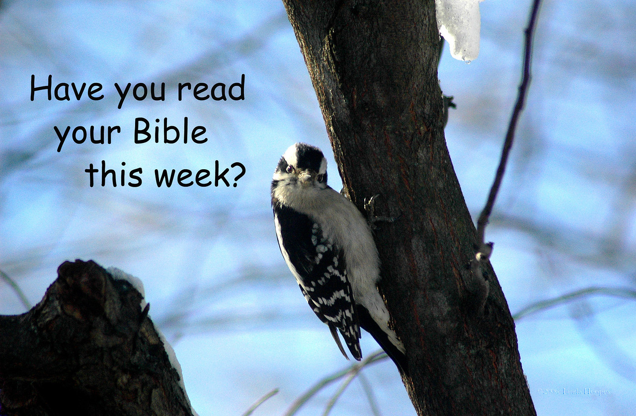 Have you read your Bible this week?