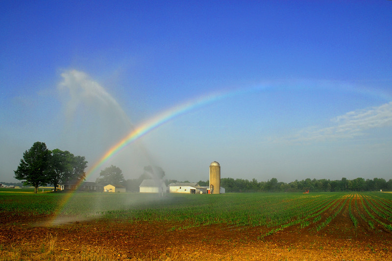 While driving by this field one morning, the light was right and the irrigation of the field created the most beautiful rainbow. What a symbol to represent what the farmer does in providing a harvest that will grace our tables