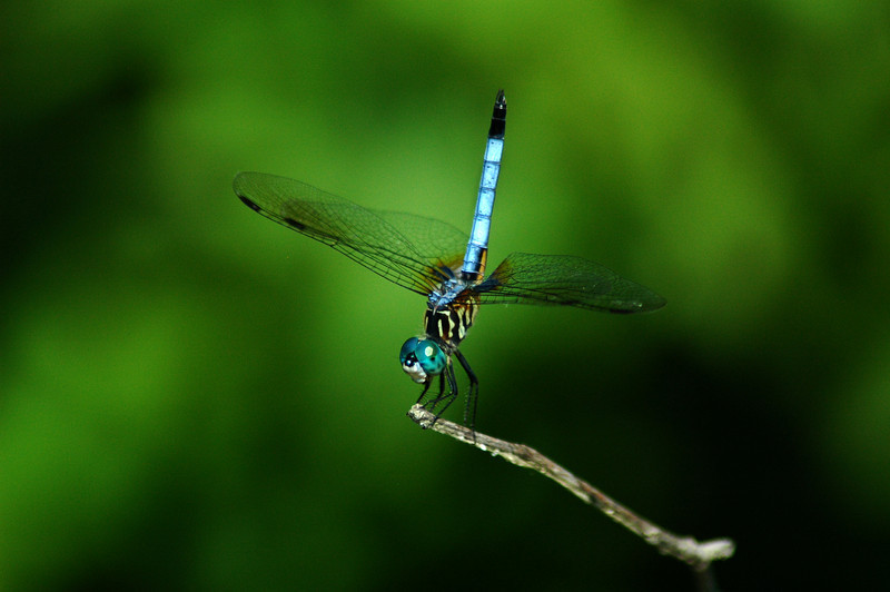 Eyed by a Dragonfly