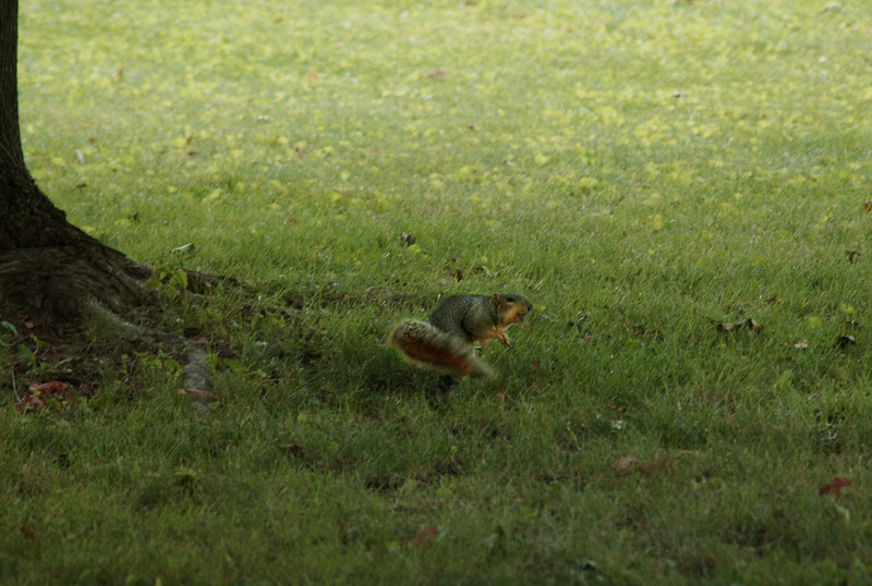 This squirrel was caught in the act of twirling around in the backyard. He appears to be breakdancing!