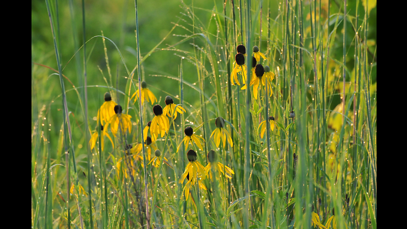 Wild Flowers at a State Reservoir