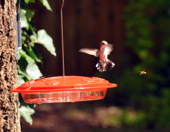 Hummer and Buzzer Battle