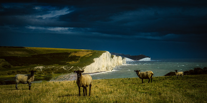 Four Sheep And Seven Sisters