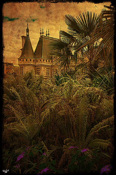 The Chateau in the Jungle