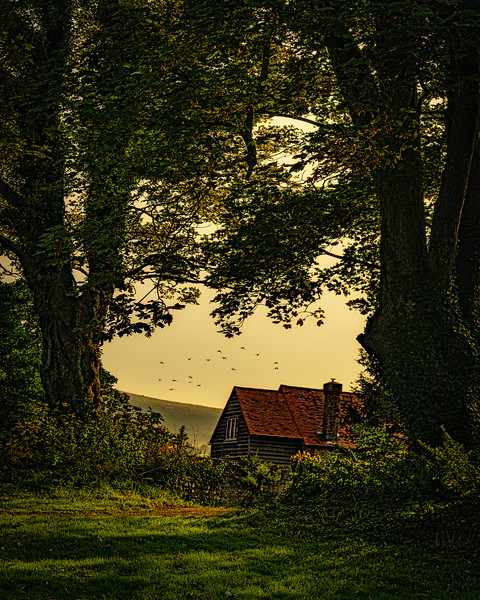 The Last House By The Woods