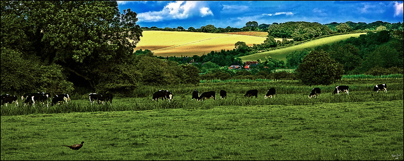 Sussex Pastoral Scene with Cows and a Pheasant