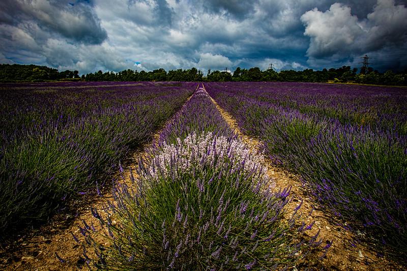 Lavender Cloudscape