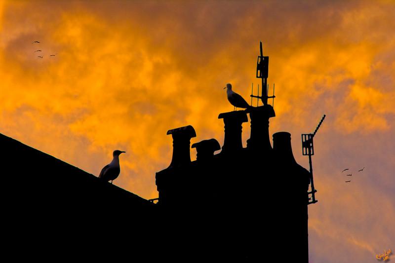 Brighton Chimneys at Sunset