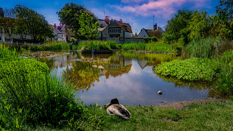 The Duck Pond
