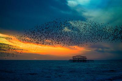 Starling Sunset