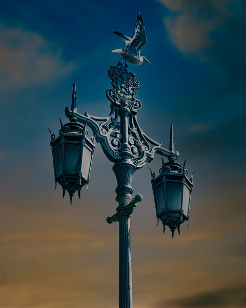Victorian Street Lamp With Gull
