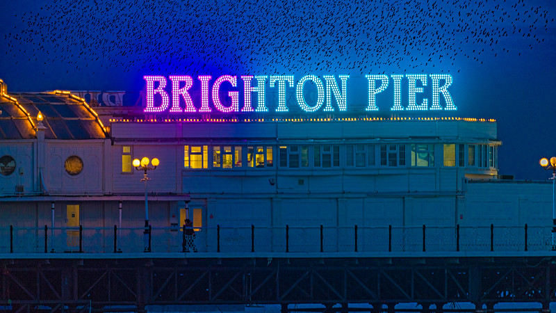 Brighton Pier & Starlings