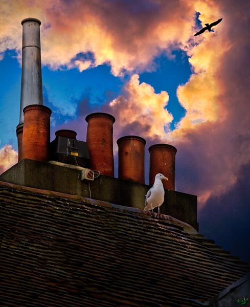 Rooftop with Chimneys and a Gull