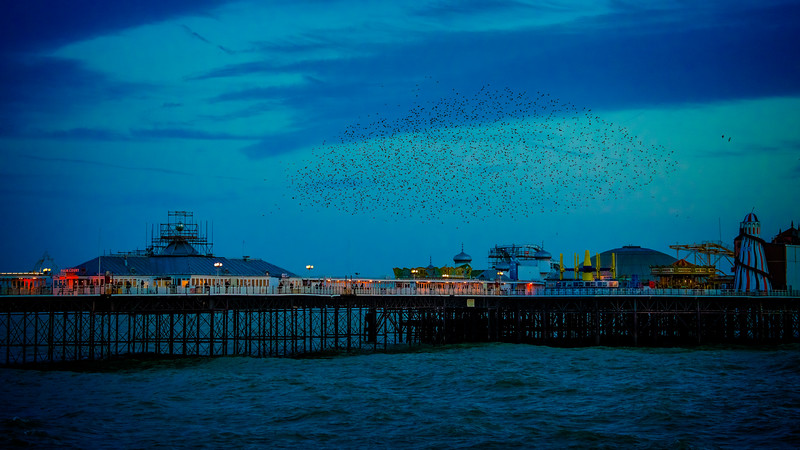 Murmuration Over The Palace Pier