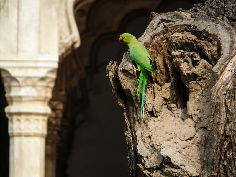 Parrot and the Palace, Agra Fort