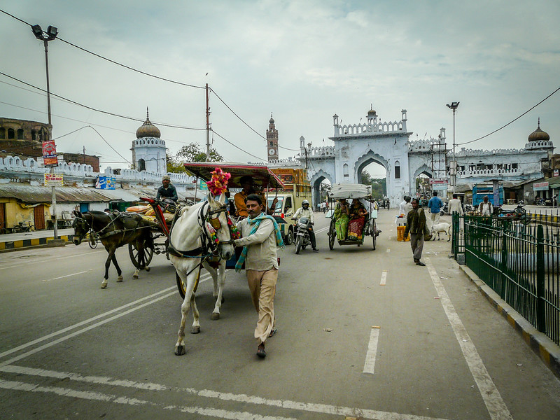 Horses on the Street, Lucknow, India