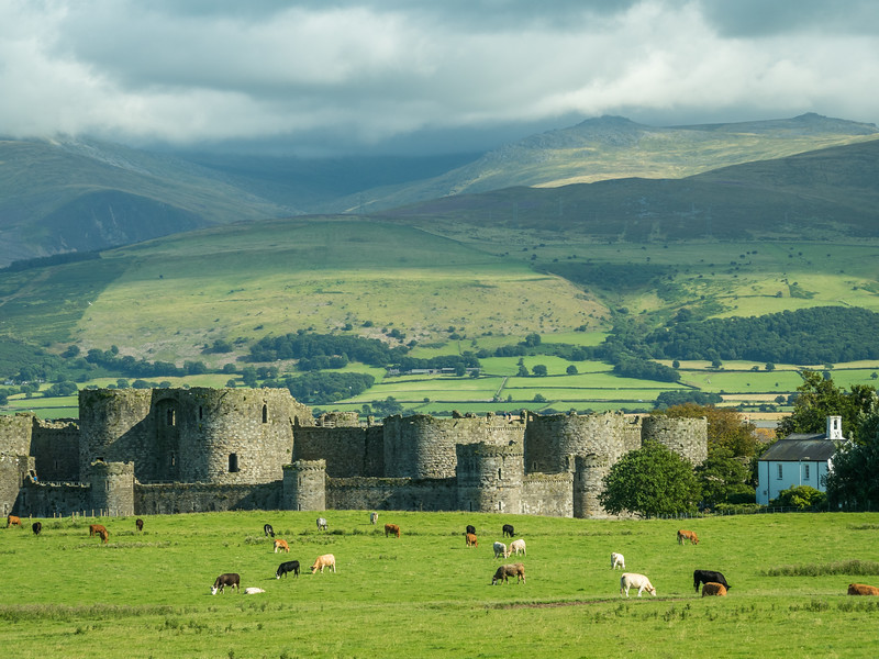 Cows and the Castle, Beaumaris, Wales