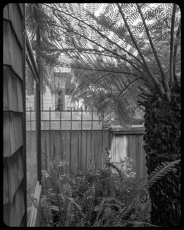 Clifford Terrace back garden.
