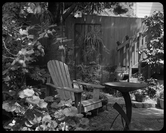 Back garden, Clifford Terrace