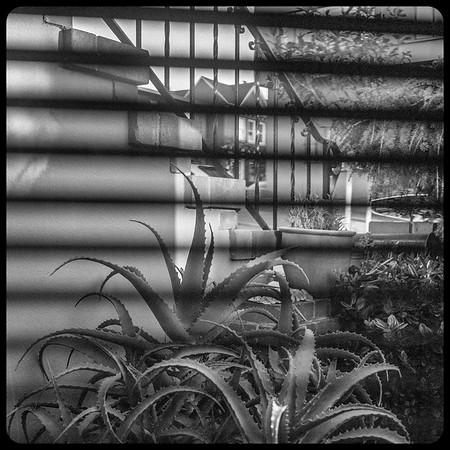 Front Garden, Clifford Terrace