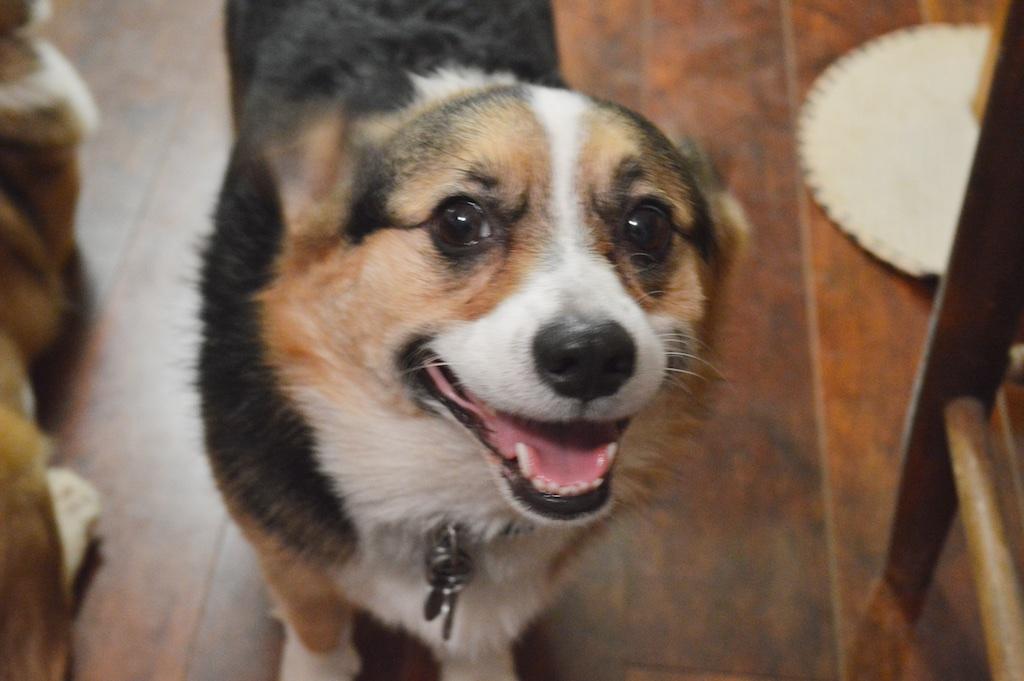 Muffin (K.C.'s dog)