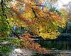 Fall foliage at Bailey Arboretum.