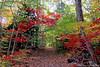Autumn foliage at Bailey Arboretum.