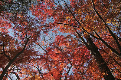 Fall foliage at Cedarmere.