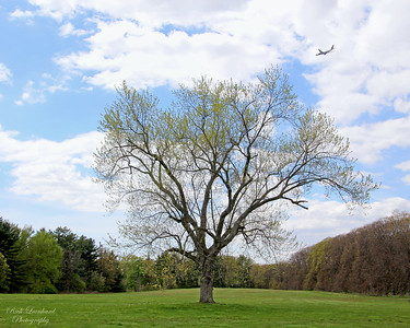 Budding tree and airplane at Old Westbury Gardens.