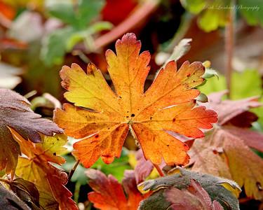 Autumn foliage at Old Westbury gardens.