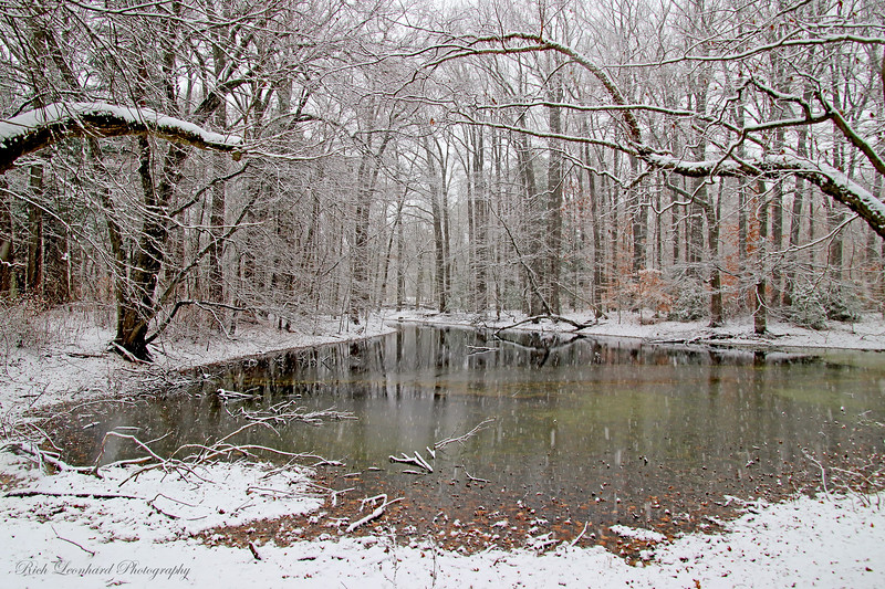 Pond at Old Westbury Gardens with frosted trees. 2017.